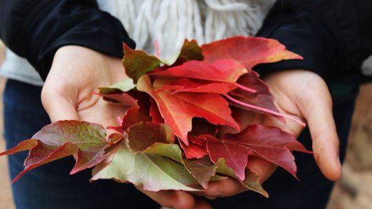 Collecte de feuilles mortes