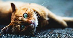 Aidez-vous les chats errants?